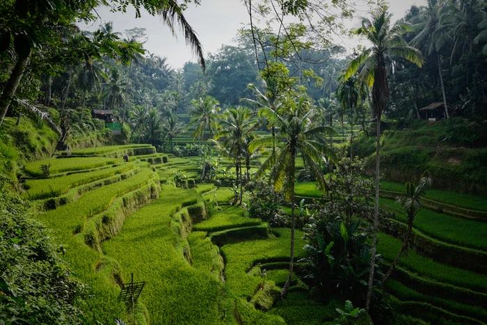 4 Alasan Wisatawan Kembali Ke Bali
