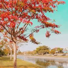 Taman Pancing, Tempat Piknik dan Mancing Gratis di Denpasar